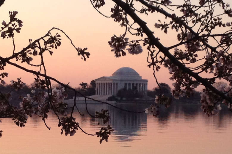 DC cherry blossoms' peak bloom period pushed back.