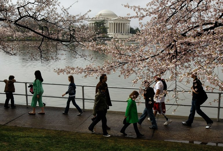 Cherry blossoms peaking soon in Washington.