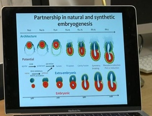 Artificial 'embryos' created in the lab
