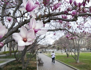 Early spring warmth wreaks havoc on plants, allergies, bugs